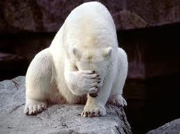 polarbear-shame?
