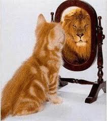 cat is lion