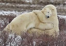 PB hug