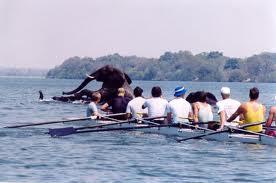 elephant & rowers