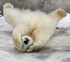 Polar B-think
