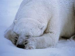 sad Pbear