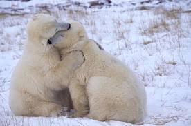 huggin pbears