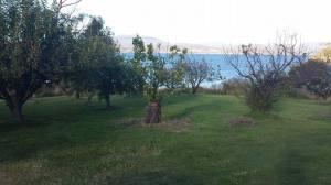 Farm-orchard